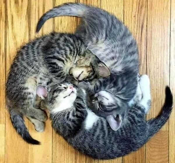 Прикольные коты (24 фото)