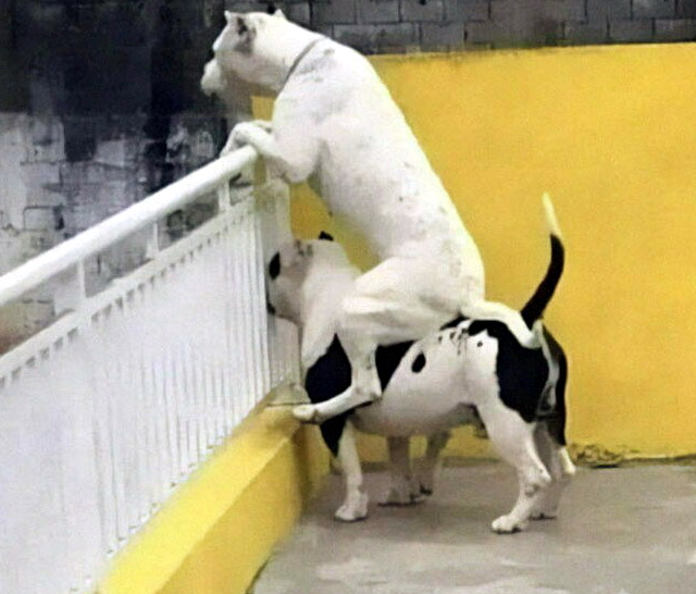 Собаки приколы