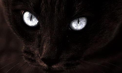 Черные кошки в ночи