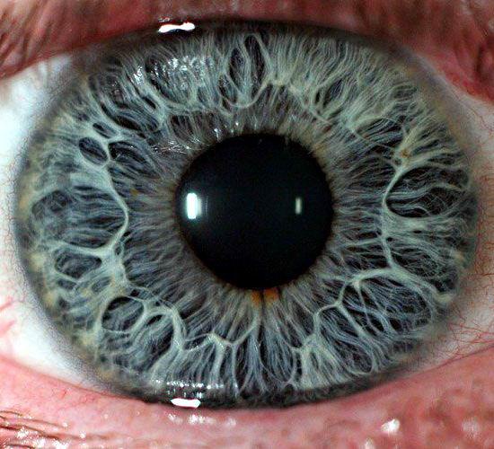 Макросъемка человеческих глаз