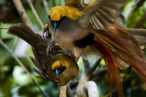 Необычно красивые птицы 01 dobrosos