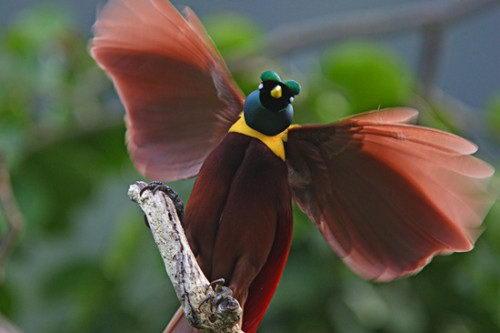 Необычно красивые птицы 03 dobrosos