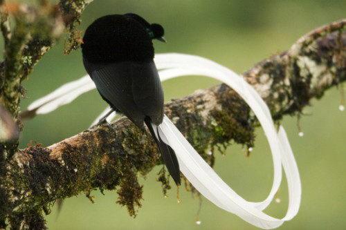 Необычно красивые птицы 06 dobrosos