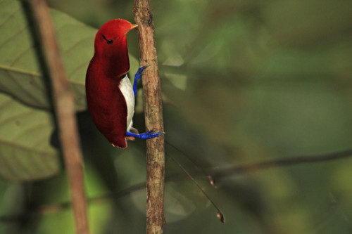 Необычно красивые птицы 07 dobrosos