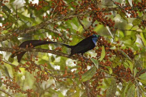 Необычно красивые птицы 11 dobrosos