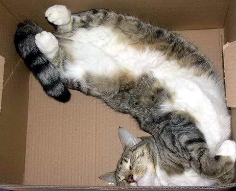 Кошки в коробках 02 dobrosos