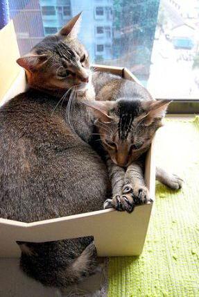 Кошки в коробках 04 dobrosos