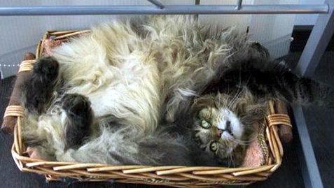 Кошки в коробках 06 dobrosos