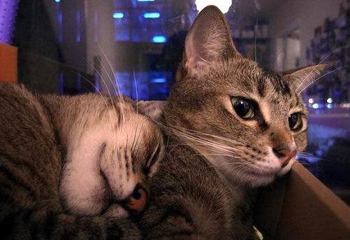 Кошки в коробках 07 dobrosos