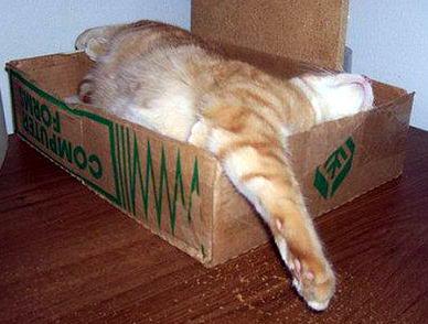 Кошки в коробках 08 dobrosos