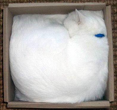 Кошки в коробках 10 dobrosos