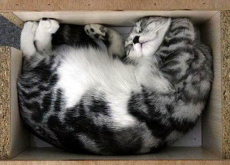 Кошки в коробках 12 dobrosos