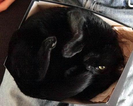 Кошки в коробках 15 dobrosos