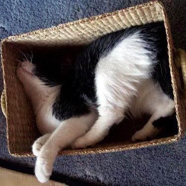 Кошки в коробках 17 dobrosos