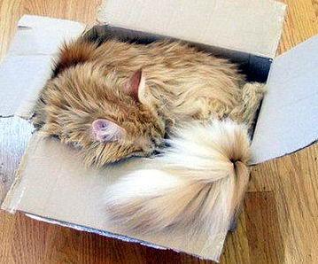 Кошки в коробках 18 dobrosos