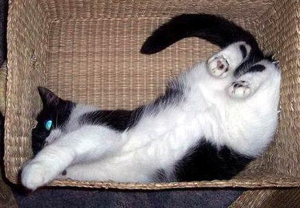 Кошки в коробках 19 dobrosos