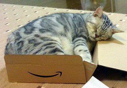 Кошки в коробках 20 dobrosos