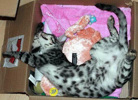 Кошки в коробках 22 dobrosos