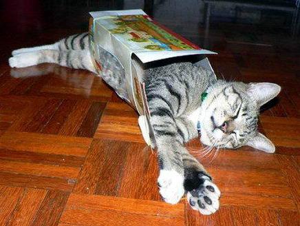 Кошки в коробках 23 dobrosos