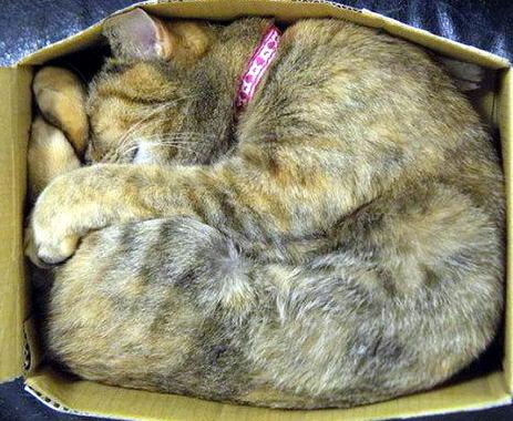 Кошки в коробках 24 dobrosos