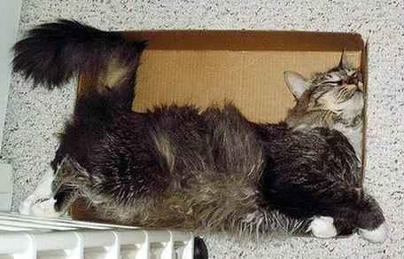 Кошки в коробках 25 dobrosos