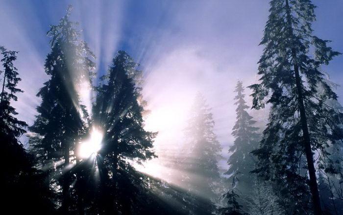 Солнечные лучи зимой красиво 4 dobrosos
