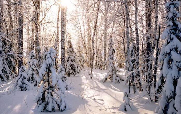 Солнечные лучи зимой красиво 7 dobrosos