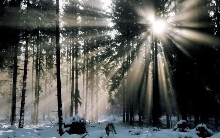 Солнечные лучи зимой красиво 8 dobrosos