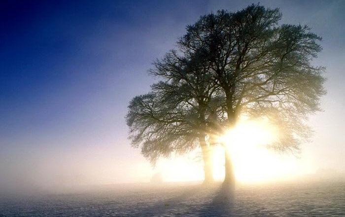 Солнечные лучи зимой красиво 9 dobrosos