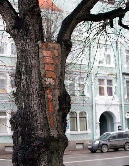 Такое увидишь только в России 11 dobrosos