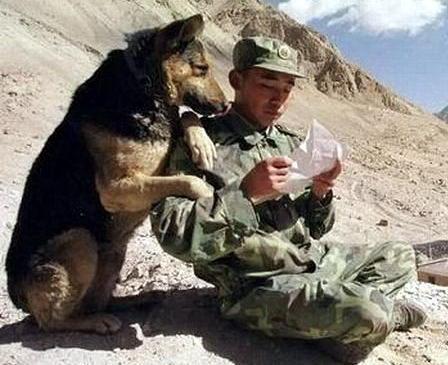 Армейские фото приколы 11 dobrosos