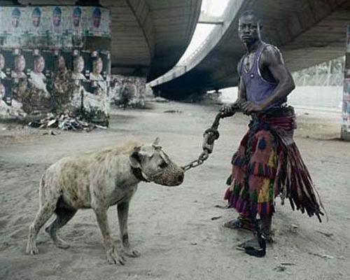 Домашние животные в Нигерии 02 dobrosos