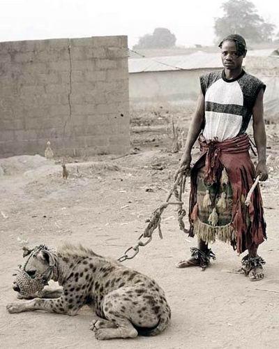 Домашние животные в Нигерии 05 dobrosos