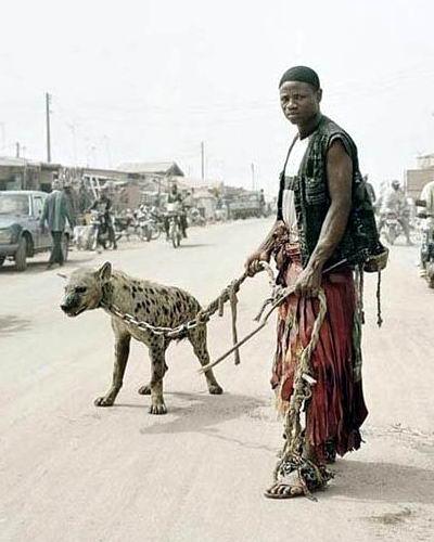 Домашние животные в Нигерии 07 dobrosos