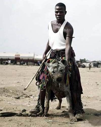 Домашние животные в Нигерии 08 dobrosos