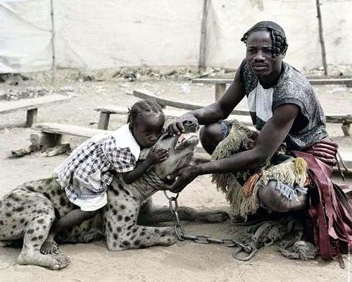 Домашние животные в Нигерии 09 dobrosos
