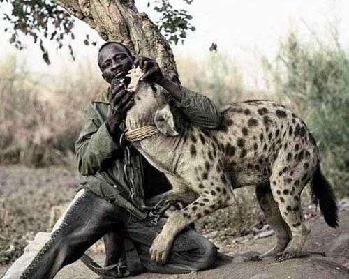Домашние животные в Нигерии 10 dobrosos