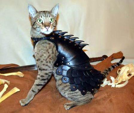 Кот в броне 1 dobrosos