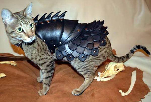 Кот в броне 2 dobrosos