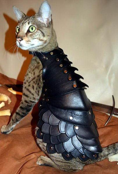 Кот в броне 3 dobrosos