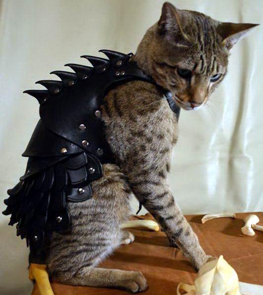 Кот в броне 4 dobrosos
