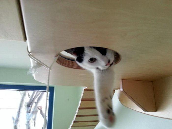 кошачья комната 01 dobrosos