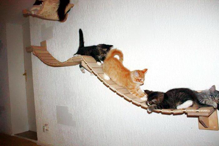 кошачья комната 05 dobrosos