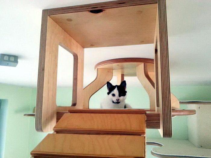 кошачья комната 07 dobrosos