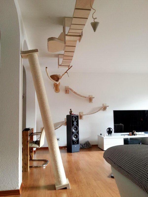 кошачья комната 10 dobrosos