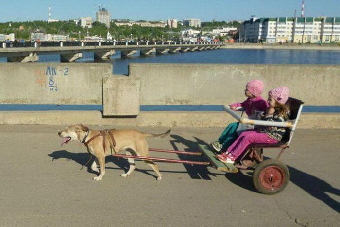 dobrosos фото приколы 01 Одна собачья сила и дети довольны!
