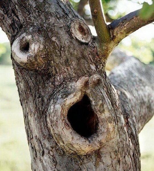Необычные деревья 01 dobrosos