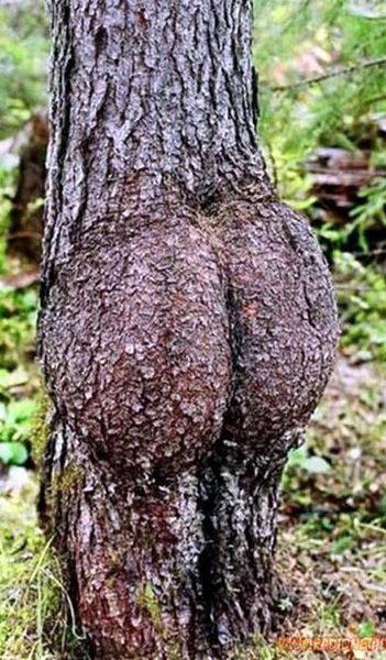 Необычные деревья 02 dobrosos