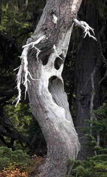 Необычные деревья 03 dobrosos