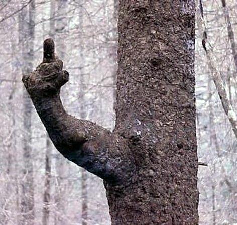 Необычные деревья 04 dobrosos